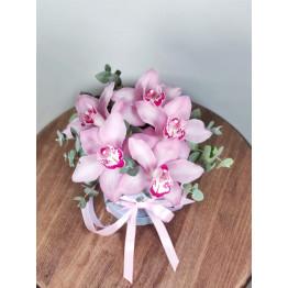 коробочка орхидей